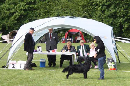 Floortje KCM 2015 Talloch Dawn Flatcoated Retriever